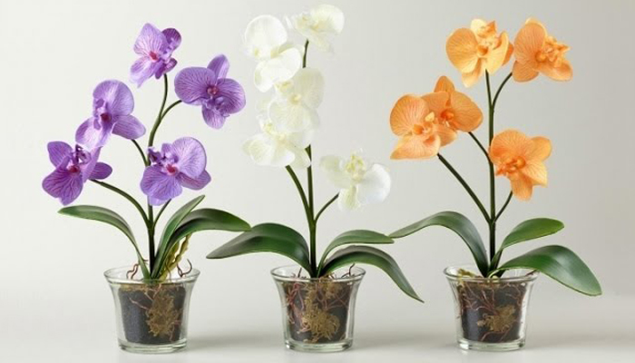 Орхидеи комнатные